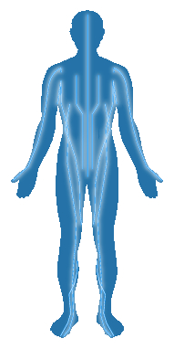 llustration showings the human body (anterior view) with meridians